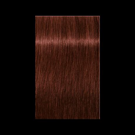 Igora Royal Absolutes 6-80 krémhajfesték, 60ml